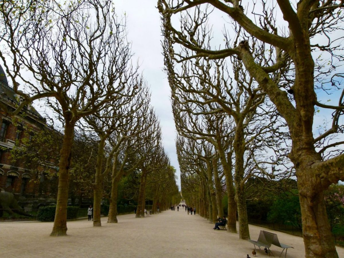 Bare winter trees poetically line a park lane in Paris.