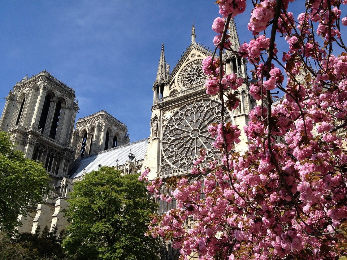 Paris in the spring offers poetic sights such as cherry blossoms in bloom.