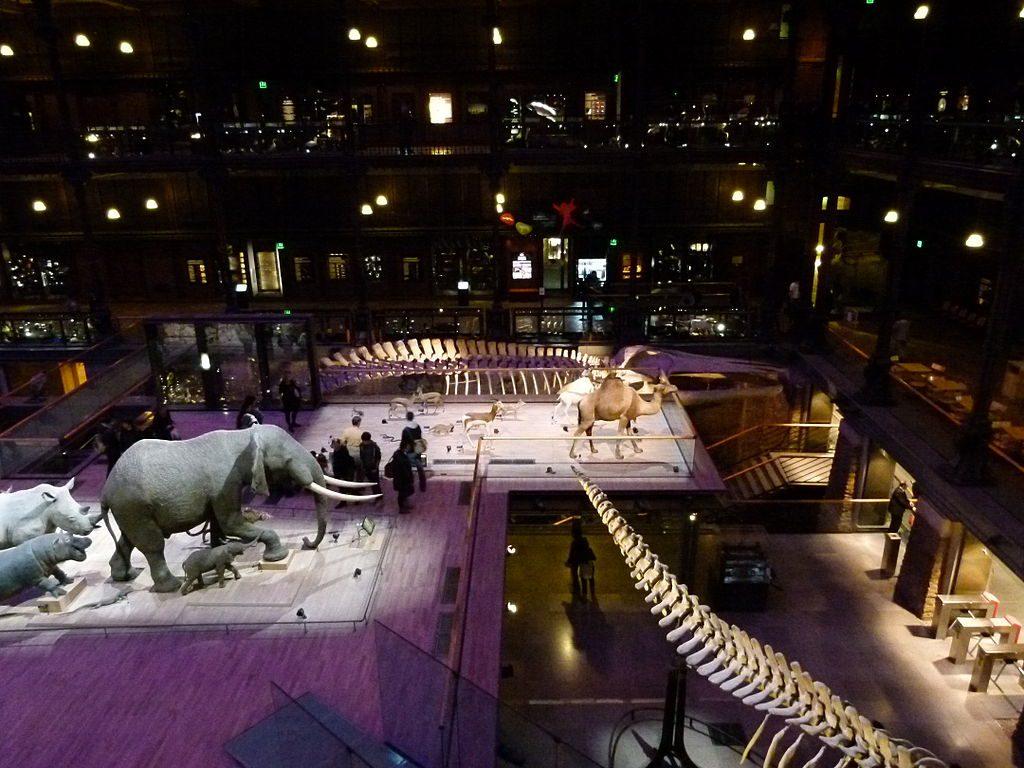 La Grande Galerie de l'Evolution, National Museum of Natural History, Paris. Wikimedia Commons