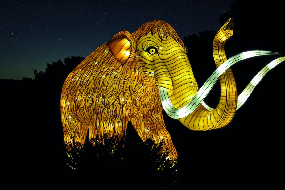 Woolly mammoth at the Illuminated species show, a nocturnal exhibit running at the Jardin des Plantes through January 2019.